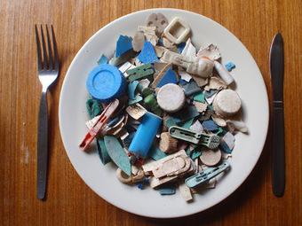 Living Alongside Wildlife: Plastic for Dinner: Marine Debris and its Effects on Seabirds   earthmergency   Scoop.it