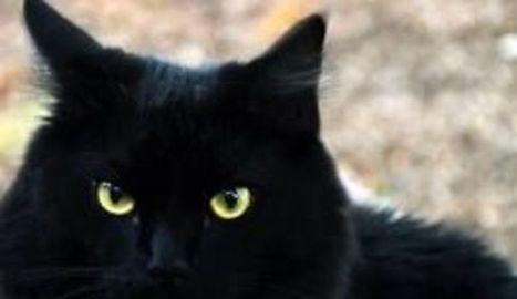La longue marche du chat Suika pour retrouver ses maitres après le tsunami | CaniCatNews-actualité | Scoop.it