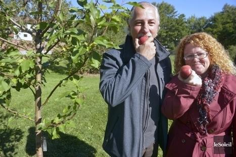 Verdir son quartier: des idées citoyennes portent fruit - LaPresse.ca | Permaculture en France | Scoop.it