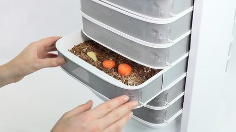 Raise Edible Insects at Home With the Livin Farms Desktop Hive | Entomophagy: Edible Insects and the Future of Food | Scoop.it