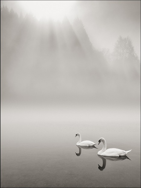 """Outstanding Bird Photography 