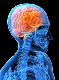 Did you know that you actually have two brains? | Leadership and Spirituality | Scoop.it