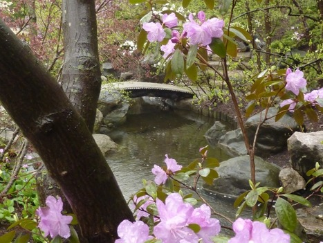 Twitter / Wizz1: Anderson Japanese Gardens ... | A Love of Japanese Gardens | Scoop.it