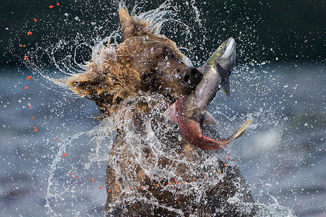 2013 Wildlife photographer of the year competition | The Guardian | Looks - Photography - Images & Visual Languages | Scoop.it