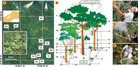Combien y a-t-il d'espèces d'arthropodes dans une forêt tropicale ?   ecology   Scoop.it
