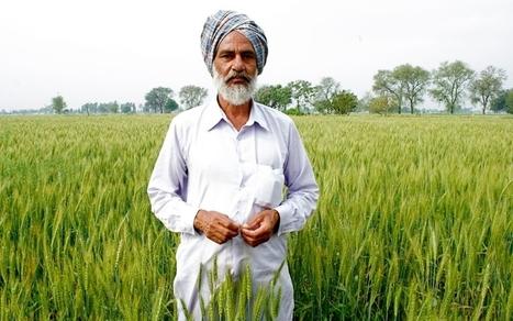 India's independent farmers embrace organic | Al Jazeera America | AP Human Geography | Scoop.it