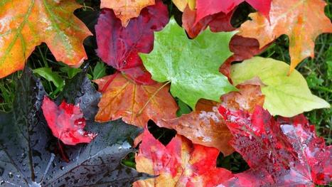 Is this the end of autumn as we know it?   Sustain Our Earth   Scoop.it
