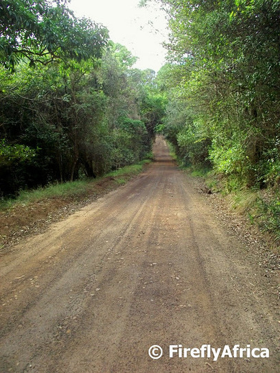 Knysna forest roads | What Surrounds You | Scoop.it