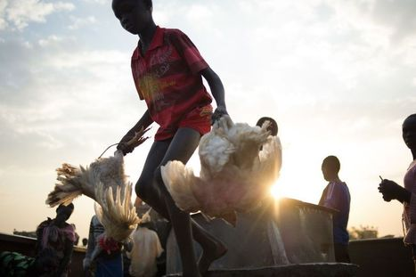 Why South Sudan May Face World's Worst Famine in Quarter Century   Nutrition Today   Scoop.it