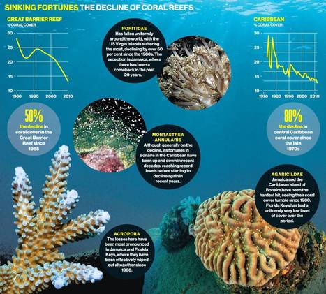 Coral alert: destruction of reefs 'accelerating' with half destroyed over past 30 years | Farming, Forests, Water, Fishing and Environment | Scoop.it