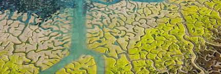 Quand l'eau dessine des oeuvres d'art | Zones humides - Ramsar - Natura 2000 | Chronique d'un pays où il ne se passe rien... ou presque ! | Scoop.it