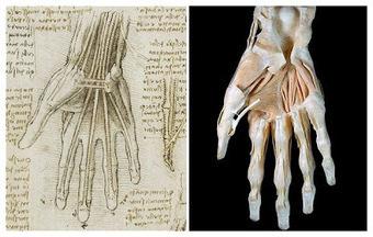 Τέχνης Σύμπαν και Φιλολογία: Η ιδιοφυής ανατομία του Λεονάρντο ντα Βίντσι, Leonardo da Vinci was right all along, new medical scans show | Τέχνης Σύμπαν και Φιλολογία | Scoop.it