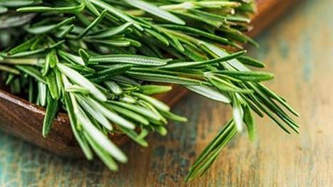 Nutrition benefits of rosemary | Shrewd Foods | Scoop.it