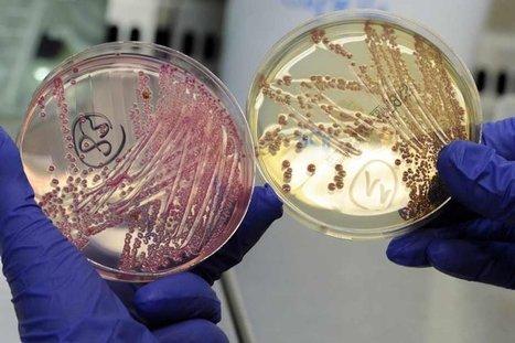 Bactérie : des graines germées en cause | Europe1.fr | Toxique, soyons vigilant ! | Scoop.it