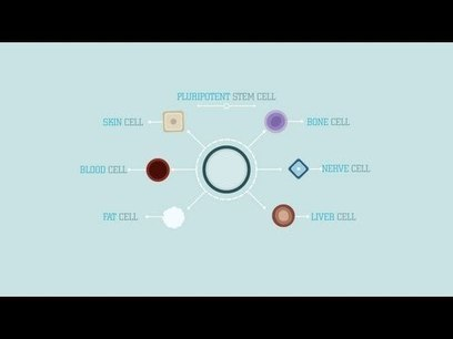 What are stem cells? - Craig A. Kohn | For Intro Classes | Scoop.it