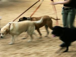 Animal Update: Humane Education « CBS San Francisco | Animal Cruelty | Scoop.it