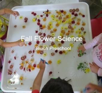 Fall flower water science | Teach Preschool | Scoop.it