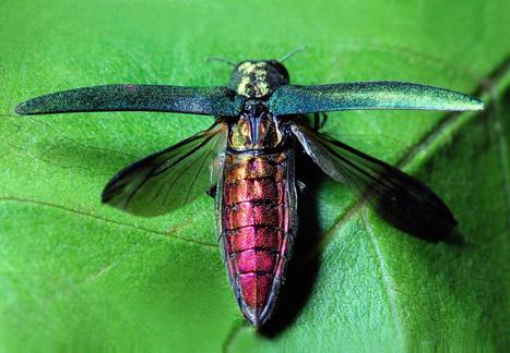 24 heures de science - Sus aux envahisseurs ! | EntomoScience | Scoop.it
