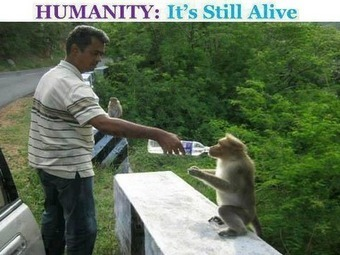 Humanity: It's Still Alive | Funny Pic And Wallpapers | Scoop.it