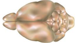 Brain Drain | The Scientist Magazine® | Longevity science | Scoop.it
