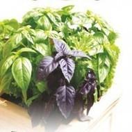 All Herb Seeds, Order seeds online, Seeds company in india | Buy flower seeds online, Flower seeds online, Garden seeds, Flower seeds, Herb seeds | Scoop.it
