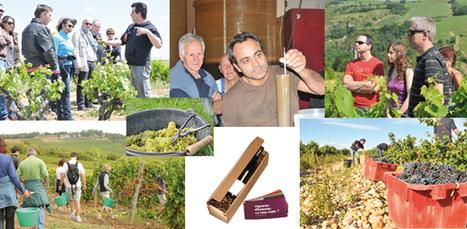 Un pied au Domaine : mettez-vous dans la peau d'un vigneron ... | Oenotourisme | Scoop.it