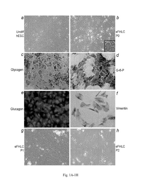 WO2014004784A1 GENERATION OF HEPATOCYTES FROM PLURIPOTENT STEM CELLS | Stem Cell Research, Regenerative Medicine, and Drug Discovery | Scoop.it