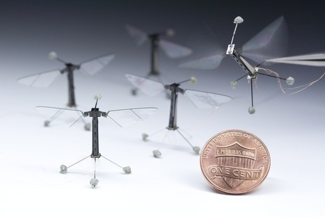 First controlled flight of an insect-sized robot | Robohub | Actualité robotique | Scoop.it