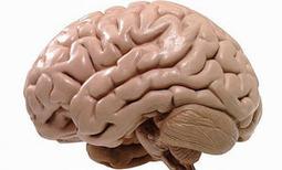 Spelen en leren in de pas met hersengroei | Achtergrondinformatie Werkconcept Critical Skills | Scoop.it