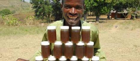 Malawi : l'apiculture profite doublement aux habitants de Chibalo | Confidences Canopéennes | Scoop.it