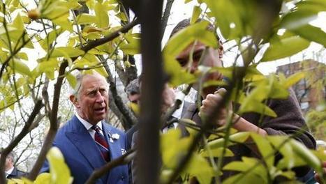 Syria war linked to climate change: Britain's Prince Charles | Sustain Our Earth | Scoop.it