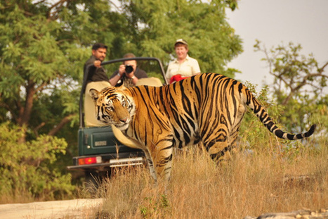 Visitors Flock Jim Corbett National Park | India Travel & Tourism | Scoop.it