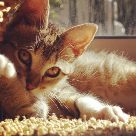 Cats brighten up our lives - The News-Press | Cat Stuff | Scoop.it