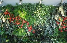 Vertical garden planters,vertical gardens in dubai,metal,aluminum,pots,containers | Stainless Steel Planters is the best planter for gardening | Scoop.it