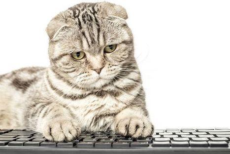 Un gato se hace viral al ocupar un puesto de trabajo como comunity manager   Social Media, Marketing y Contenidos   Scoop.it