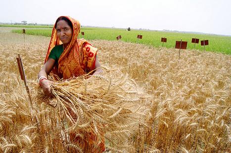 Bangladesh: Sustaining food security   Food Security   Scoop.it