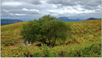Vallée de l'Agly : zoom sur le domaine des Schistes | La Cave à vin | Vins et schistes | Scoop.it