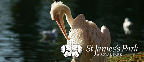 The Royal Parks - St James's Park | The Royal Parks of London | Scoop.it