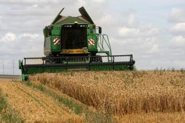 Après des récoltes désastreuses, les céréaliers obtiennent des mesures de secours | L'actu agricole dans la Marne et la région | Scoop.it