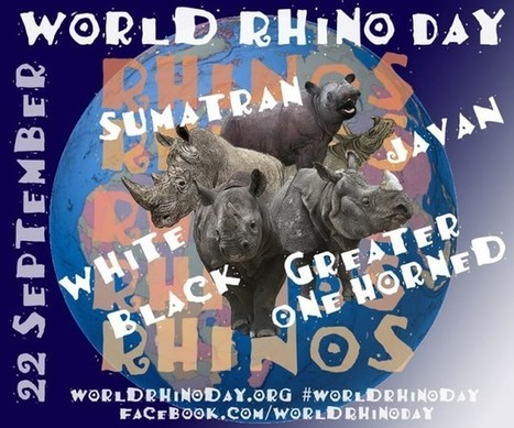 World Rhino Day 2013 Events | What's Happening to Africa's Rhino? | Scoop.it