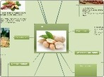 Cacahuate (Arachis hypogaea) - Mind Map | Cacahuate (Arachis hypogaea) | Scoop.it