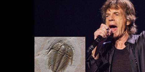 Mick Jagger est aussi le nom d'un trilobite | EntomoNews | Scoop.it
