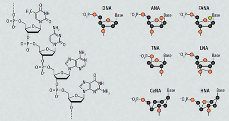 Synthetic XNA molecules can evolve and store genetic information, just like DNA | Final Fantasy Science | Scoop.it