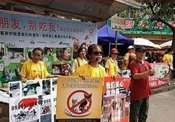 NGOs Join to Fight China's Dog and Cat Meat Industry - Environment News Service | Animals R Us | Scoop.it