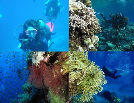 Oriental Tours Egypt - Diving   Special Tours,Packages and Programs   Scoop.it