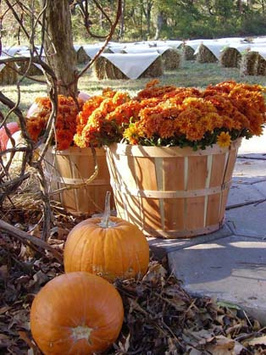 fall-autumn-wedding-reception   Autumn wedding ideas   Scoop.it