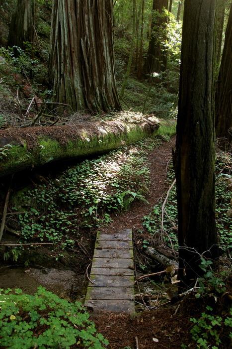 steepravine: Trail Through The Redwoods I went... | Redwoods | Scoop.it