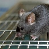 11 Facts About Animal Testing | Banning of Cosmetic Animal Testing | Scoop.it