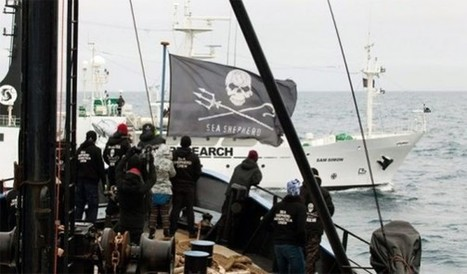 Sea Shepherd Launches Legal Division to Protect Sea Life | Wildlife Trafficking: Who Does it? Allows it? | Scoop.it