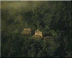 El Misterio de la selva de los mayas | El misterio de la selva de los Mayas | Scoop.it